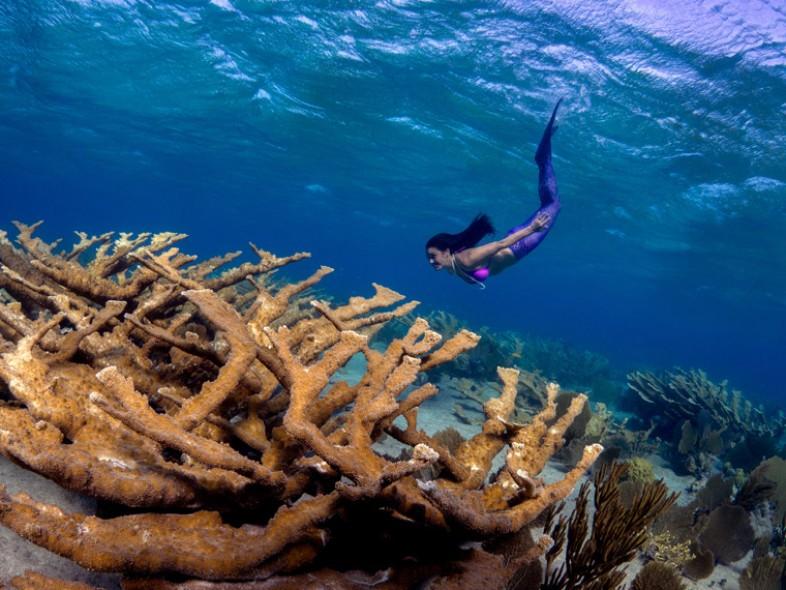 Undervatn Olympus