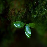 green_leaf_kentaro_fukuda